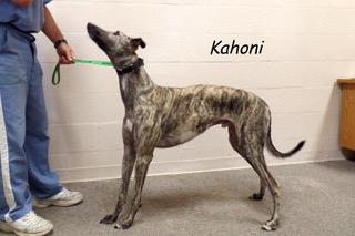 kahoni_0115
